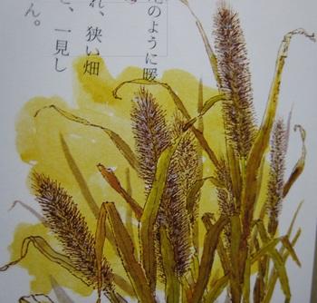 チカラシバ(星野).jpg